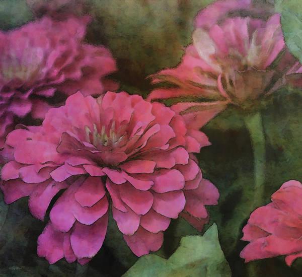 Photograph - Pink Zinnia 2395 Idp_2 by Steven Ward
