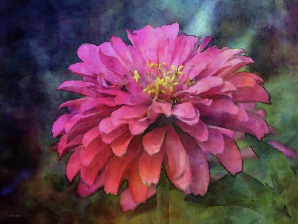 Photograph - Pink Zinnia 3035 Idp_2 by Steven Ward