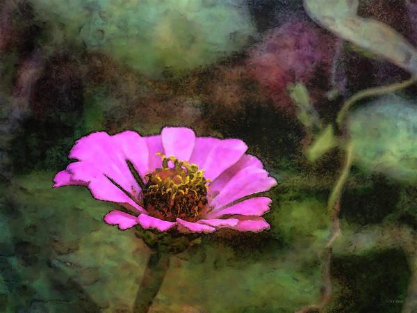 Photograph - Pink Zinnia 5779 Idp_2 by Steven Ward