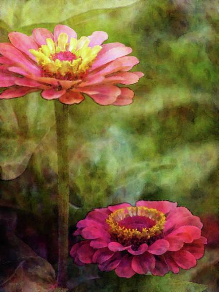 Photograph - Pink Zinnias 4413 Idp_2 by Steven Ward