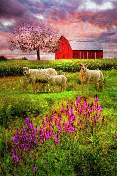 Photograph - Pinks by Debra and Dave Vanderlaan