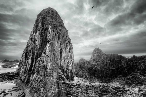Photograph - Pinnacle At Seal Rock Beach by Dee Browning