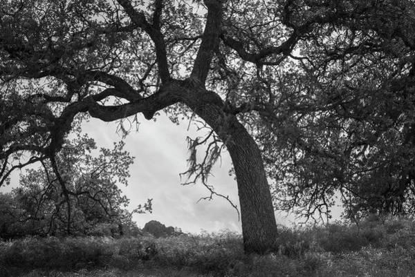 Photograph - Pinnacles Np I Bw by David Gordon