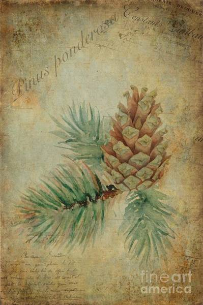 Wall Art - Painting - Pinus Ponderosa by John Edwards