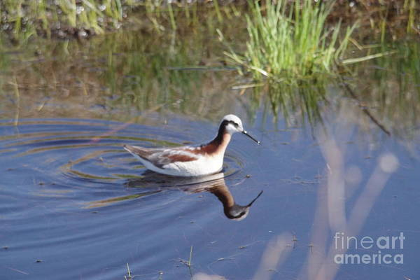 Wall Art - Photograph - Piper And Its Reflection by Jeff Swan