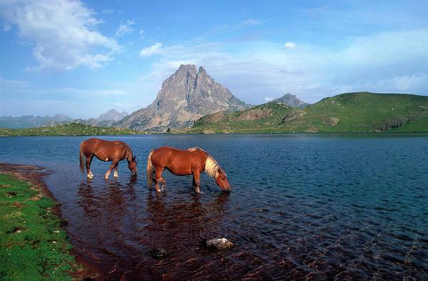 Pyrenees Photograph - Pirineas, Summer, Ayous Lakes, 2 Horses by A. Demotes
