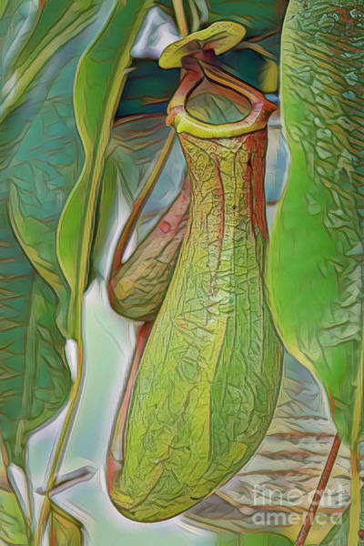 Photograph - Pitcher Plant by Deborah Benoit