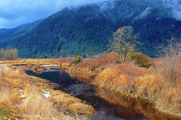 Photograph - Pitt Polder Creek by Sharon Talson
