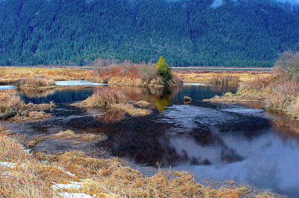 Photograph - Pitt Polder Pond With Ice. by Sharon Talson