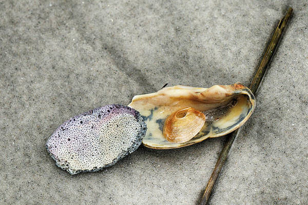 Photograph - Pitted Shell Abstract by Cate Franklyn