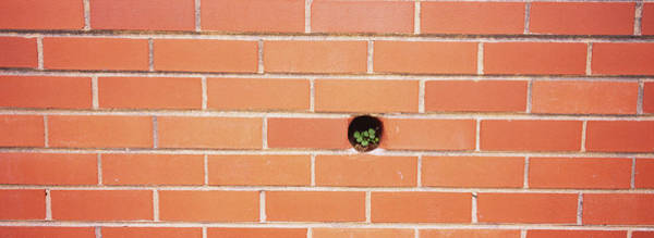 Wall Art - Photograph - Plant Growing On A Brick Wall by Panoramic Images