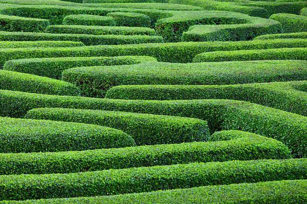 Ornamental Grass Photograph - Plant Made Maze In Park Garden by Ngkaki