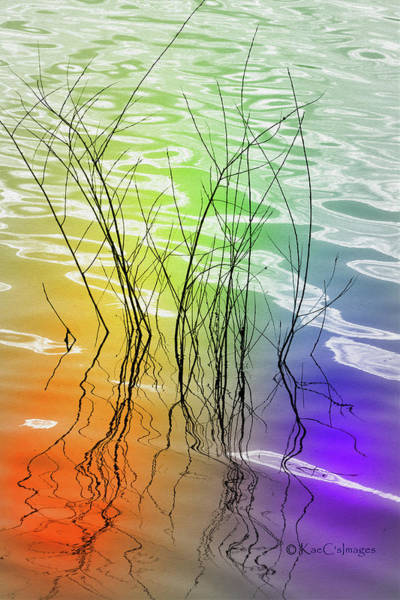 Wall Art - Photograph - Plant Reflections Colorful Water by Kae Cheatham