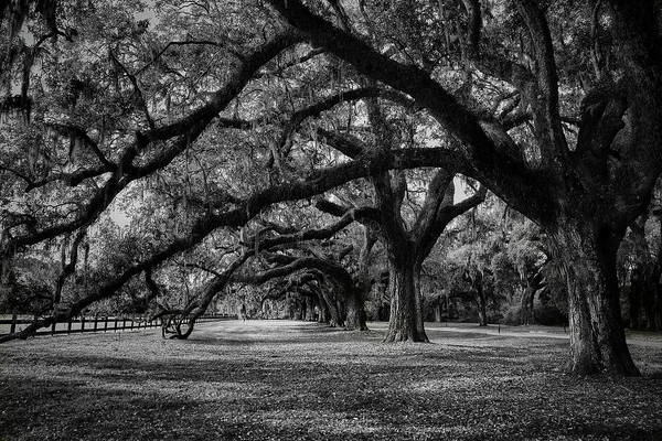 Wall Art - Photograph - Plantation Tree Tunnel by Jon Glaser