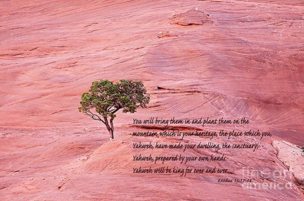 Wall Art - Photograph - Planted On The Mountain by Debby Pueschel