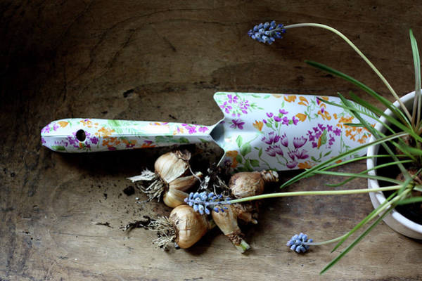 Trowel Photograph - Planting Bulbs by Story Telling Pictures