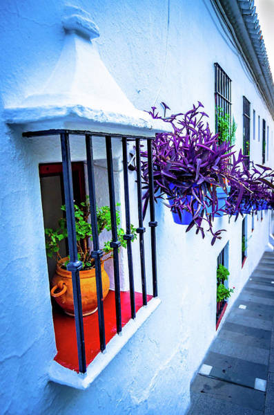 Photograph - Plants On A Facade by Borja Robles