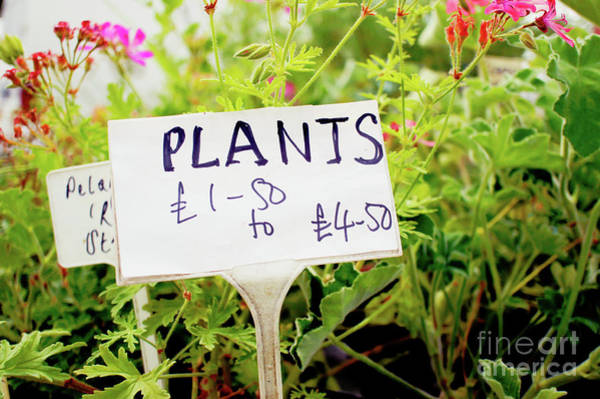 Wall Art - Photograph - Plants Sale Sign by Tom Gowanlock