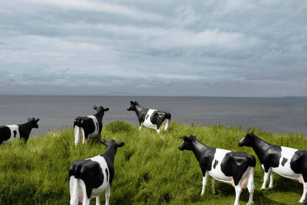 Kitsch Photograph - Plastic Cows Looking At The Sky by Baymler