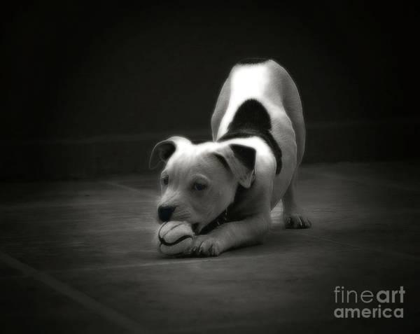 Photograph - Play Ball by John Kolenberg