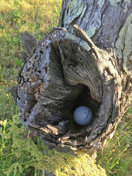 Photograph - Play It As It Lies -golf by Matthew Seufer