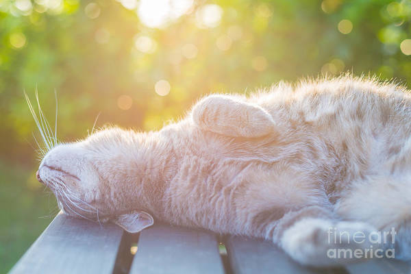 Playful Domestic Cat Lying On Wooden Art Print