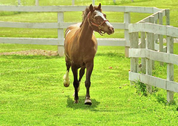 Photograph - Playful Pony by JAMART Photography