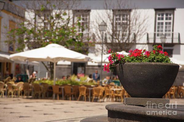 Wall Art - Photograph - Plazza And Flower Pot by Gaspar Avila