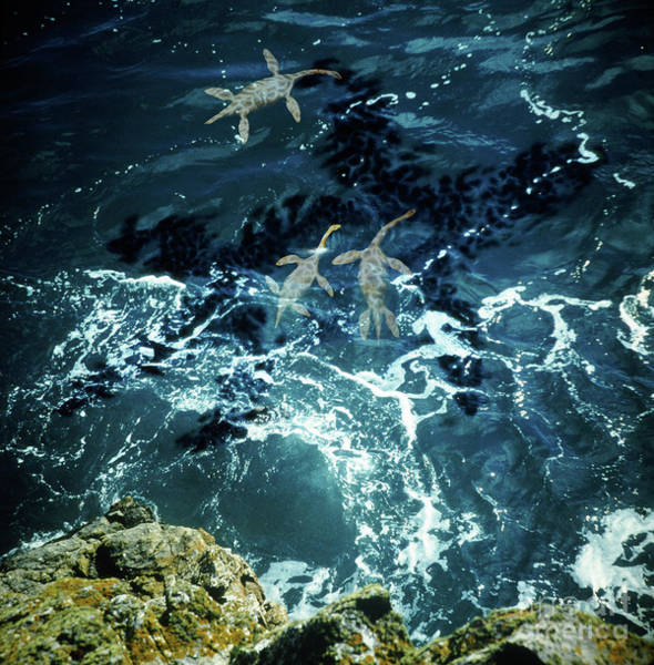 Photograph - Plesiosaurs by Warren Photographic