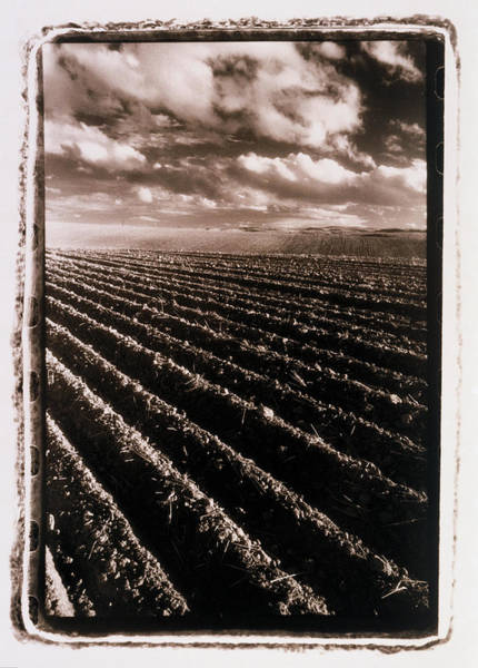 Vertical Line Wall Art - Photograph - Ploughed Field, Usa B&w by Rosanne Olson
