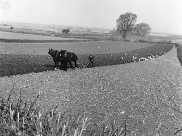 Plow Horses Photograph - Ploughing by Carl Sutton