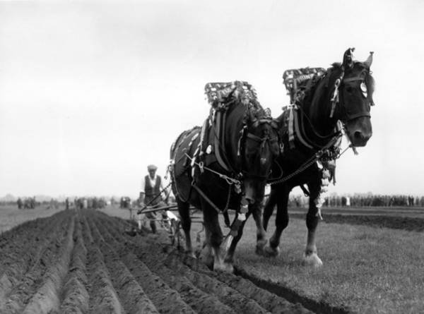 Plow Horses Photograph - Ploughing Competition by Topical Press Agency
