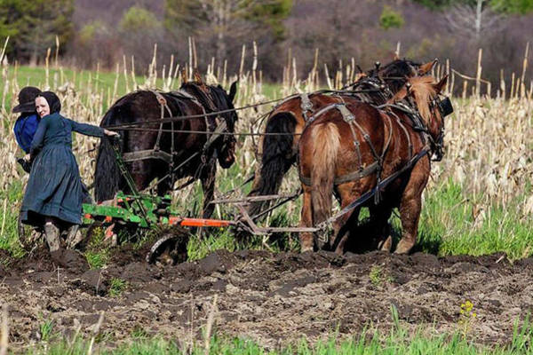 Wall Art - Photograph - Plowing The Field by Justine Fenu