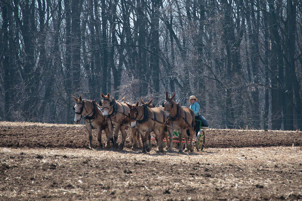 Wall Art - Photograph - Plowing The Fields - Amish Country by Bill Cannon