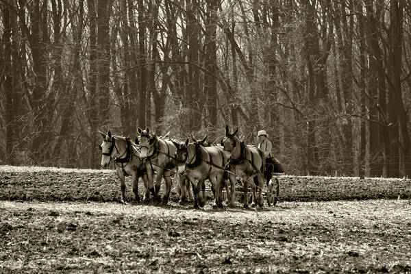 Wall Art - Photograph - Plowing The Fields - Amish Country In Sepia by Bill Cannon