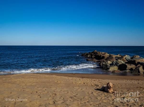 Photograph - Plum Island Scene by Mary Capriole