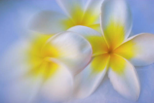 Wall Art - Photograph - Plumeria Tropical Flower Pattern by Darrell Gulin