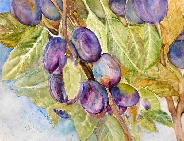 Painting - Plums On The Vine by Anna Jacke