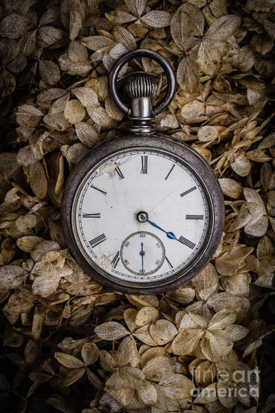 Wall Art - Photograph - Pocket Watch by Edward Fielding