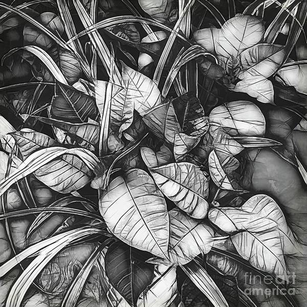 Photograph - Poinsettia In Black And White by Luther Fine Art