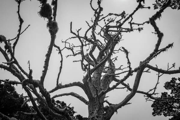 Photograph - Point Lobos Xii Bw by David Gordon
