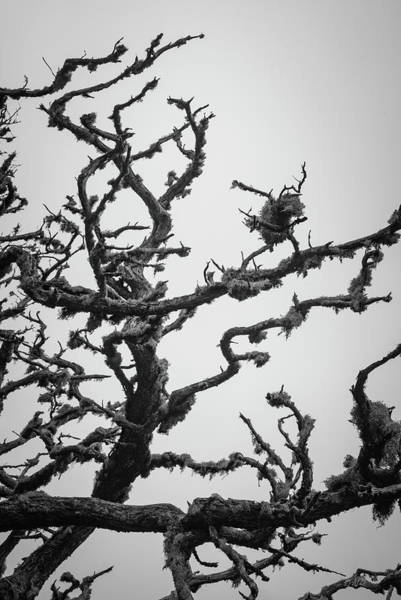 Photograph - Point Lobos Xiii Bw by David Gordon