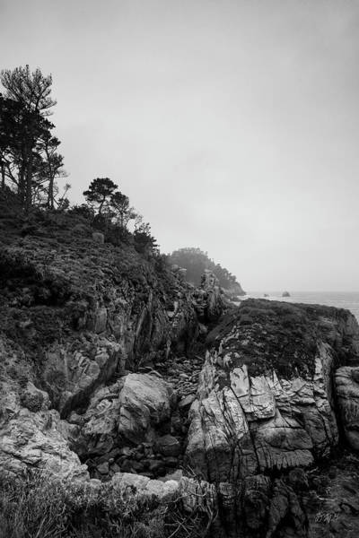 Photograph - Point Lobos Xiv Bw by David Gordon