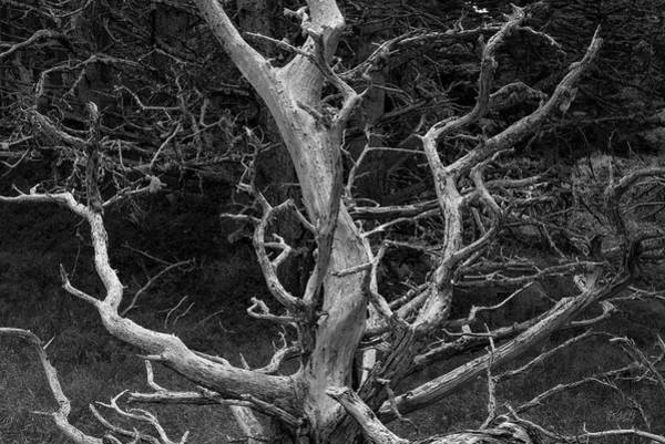 Photograph - Point Lobos Xix Bw by David Gordon