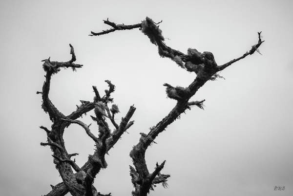 Photograph - Point Lobos Xvii Bw by David Gordon