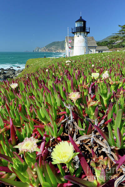 Wall Art - Photograph - Point Montara Lighthouse With Spring Flowers by George Oze