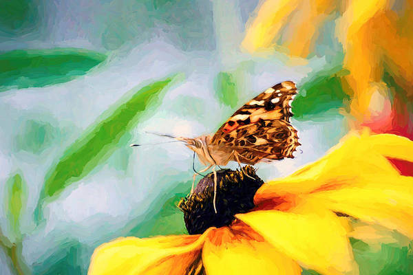 Photograph - Poised Painted Lady Butterfly by Don Northup