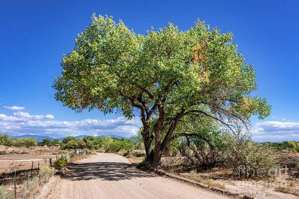 Photograph - Pojoaque Tree by Steven Natanson