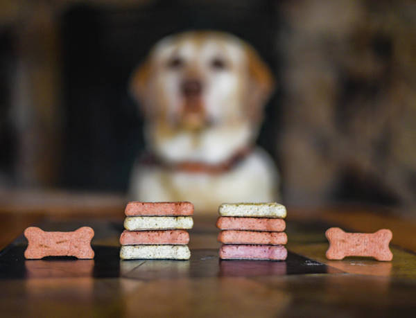 Dog Biscuit Photograph - Poker Face by David A Litman