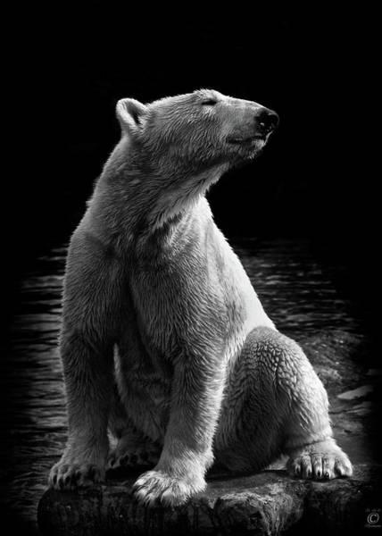 Photograph - Polar Bear by © Christian Meermann